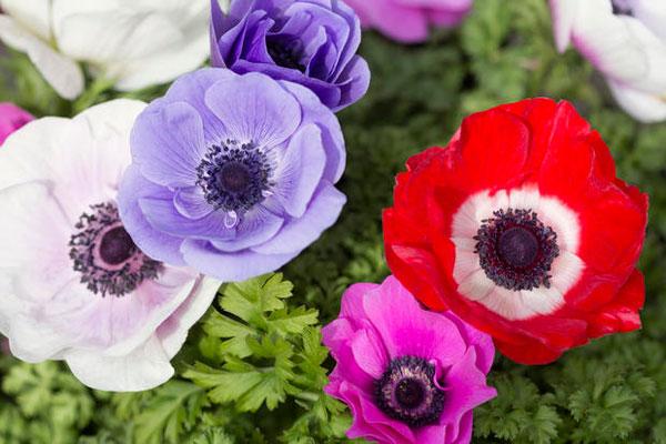 10种鲜花的英文名及含义,兰花的竟然这么污,不忍直视 英汉对照